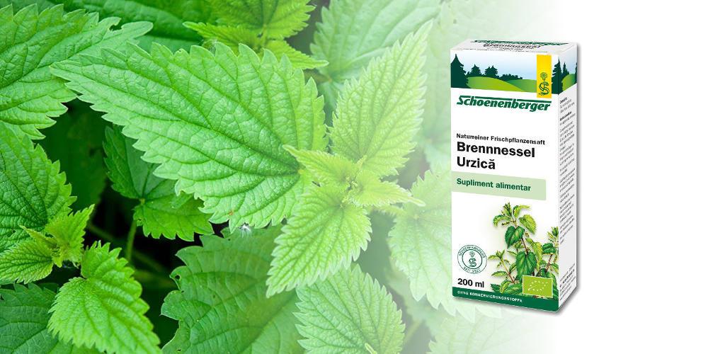Urzica - planta cu efecte terapeutice